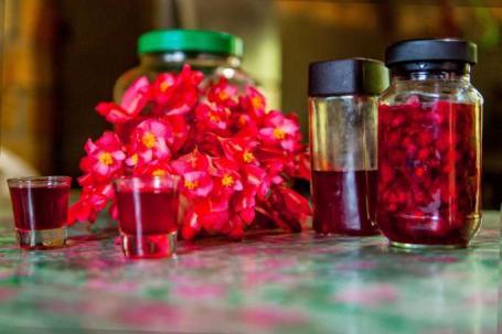 El licor con begonia goza de aceptación en Zamora Chinchipe. Tiene varias utilidades y beneficios. Foto: La Hora
