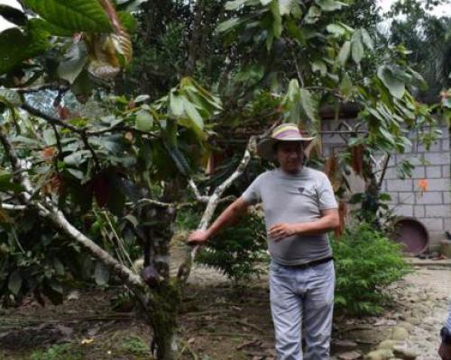 Rubén Sandoval, propietario de El Paraíso, muestra parte de sus cultivos. Foto: El Comercio