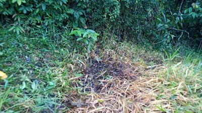 Habitantes de las comunidades waorani de Guiyero, Ganketa y Timpoka, ubicadas al norte de la vía Maxus en el Parque Nacional Yasuní, alertan por fuga de petróleo en el bloque 16. -