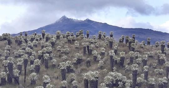 90 mil personas se benefician con el pago de 4,5 millones como parte de Socio Bosque / Foto: Cortesia del Ministerio de Medio Ambiente