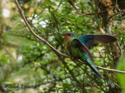 APORTE. Aves de diferentes colores y tamaños forman parte del territorio ecuatoriano. Foto: La Hora