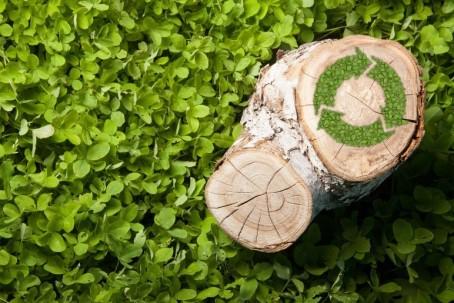 La dendroenergía es toda la energía obtenida de biocombustibles sólidos, líquidos y gaseosos primarios y secundarios derivados de los bosques, árboles y otra vegetación. Foto: TW Energy