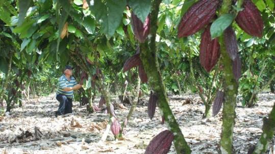 La ejecución de este plan se dará en colaboración con el Ministerio de Agricultura y la Embajada de los EE.UU. Foto: Expreso