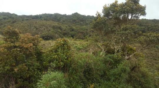 El bosque está ubicado a 40 minutos de Jima, en la vecina parroquia San Miguel de Cuyes, cantón Gualaquiza, Morona Santiago. Foto: El Comercio
