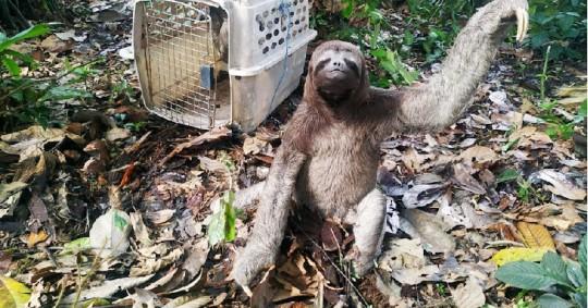 El Ministerio de Ambiente lanza campaña para combatir tráfico de vida silvestre / foto cortesía Ministerio de Ambiente