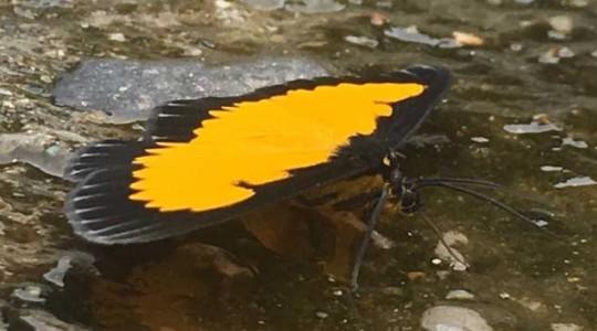 Cerca de 1 100 variedades de lepidópteros habitan en este lugar de la comunidad de Cando, en la parroquia de Tálag, del cantón Tena. Foto: El Comercio