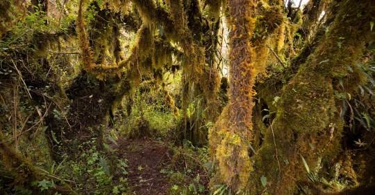 Hallan osos andinos, especie en extinción, cerca a zona ganadera en Tungurahua / Foto: EFE