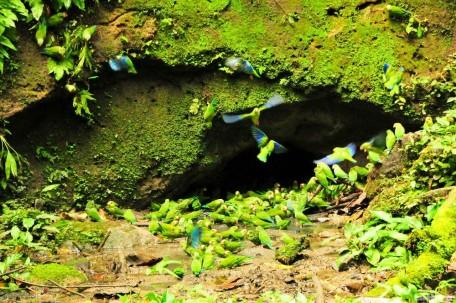 El Yasuní es una de las zonas más biodiversas del país. Foto: La Hora