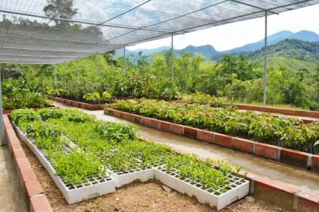 Foto: La Hora. El lugar está a disposición de estudiantes de escuelas, colegios y universidades que se encaminen a la investigación de especies forestales.