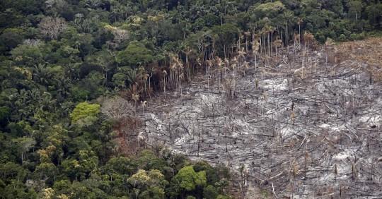 La deforestación de la Amazonía, una epidemia ambiental en silencioso auge / Foto: EFE