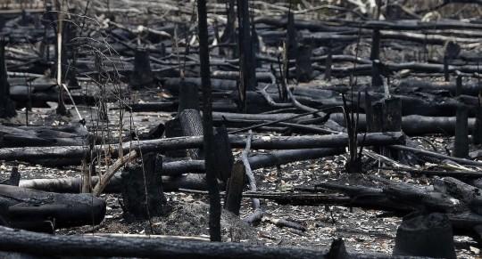 """Expertos avisan de la """"pérdida alarmante"""" de la biodiversidad en los trópicos / Foto EFE"""