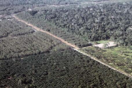 El Yasuní es reconocido como una de las zonas más biodiversas del mundo. Foto: Archivo. Foto: La Hora