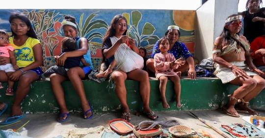 Ajo de monte, agua de bejuco y matico se utilizan en la Amazonía contra el covid / Foto: EFE