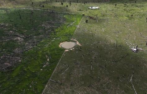 En esta toma aérea de 2013 se ve una zona deforestada de la Amazonía, en el estado de Pará, en donde unas vacas, a la derecha, pastan. Credit Nacho Doce/Reuters