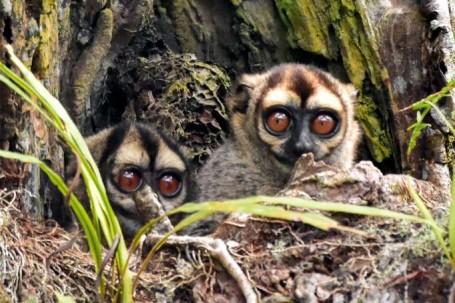 Monos del Oriente Ecuatoriano - Foto: La Hora
