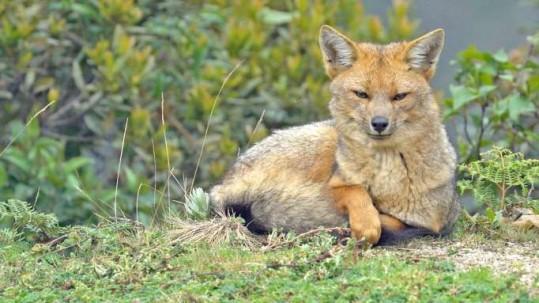 TRANQUILIDAD. La vida silvestre descansa con tranquilidad ante la ausencia de visitantes. / La Hora