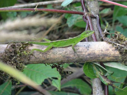 Muchos de estos reptiles pasan desapercibidos por su tamaño y su color. Foto: La Hora