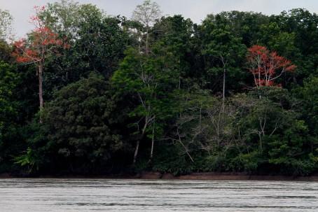 Ambiente. En el Parque Nacional Yasuní, que tiene un millón de hectáreas, hay apenas 56 guardaparques. Foto: La Hora