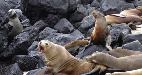 Científicos intentan descifrar el catálogo genético de Galápagos / Foto: EFE