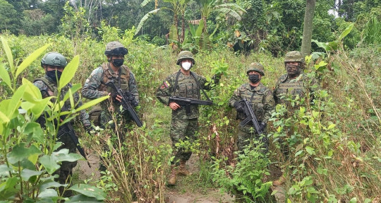 Fuerzas Armadas localizaron 20 mil plantas de coca en Sucumbíos / foto: cortesía Fuerzas Armadas