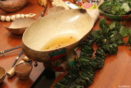 La guayusa es la bebida sagrada del pueblo kichwa de la Amazonía. Foto: La Hora