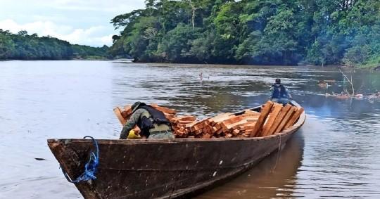 La tala ilegal de madera, un problema incontrolable en la Amazonía / Cortesía del Ejército Ecuatoriano