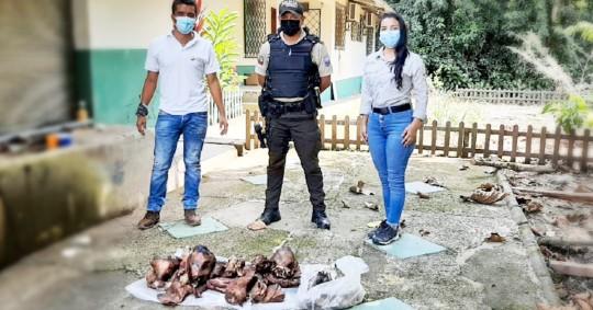 45 libras de carne de saíno fueron retenidas en Sucumbíos / Foto: cortesía de Ministerio de Ambiente