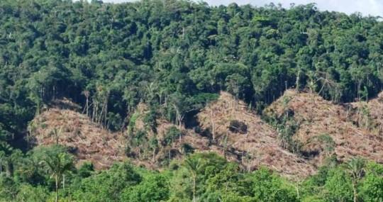 En Colombia la vegetación en la Amazonia se redujo en, por lo menos, 800.000 hectáreas. Foto: Semana Sostenible