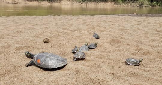 29 especies de vida silvestre volvieron a su hábitat en el Yasuní / Foto: Cortesía Ministerio de Ambiente