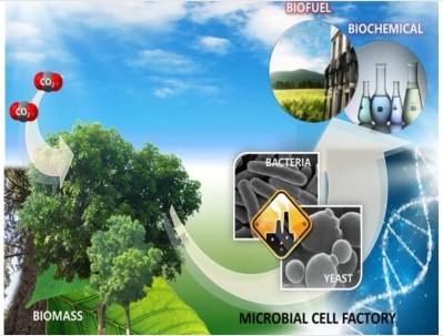 Los microorganismos facilitan la conversión de biomasa en bioenergía (IIGE, 2020).