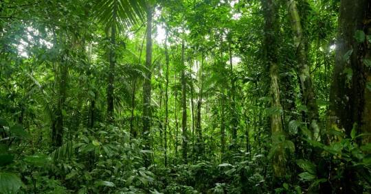 Describen nueva especie de árbol, raro y endémico en Ecuador / Foto: Shutterstock