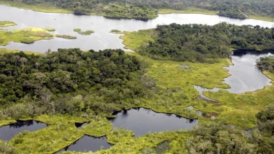 """En octubre de 2013, la Asamblea aprobó y declaró de """"interés nacional"""" la explotación petrolera en el Parque Nacional Yasuní. La oferta del Ejecutivo es que se afectaría solo el 1x1000 del parque. Es decir, las 1.035 hectáreas. Foto: Expreso"""