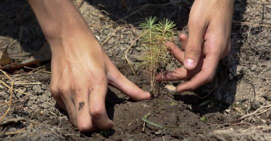 4 provincias amazónicas plantarán 100 mil árboles  / Foto: EFE