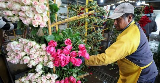 Rosas ecuatorianas entrarán sin aranceles a EEUU tras acuerdo / Foto: EFE