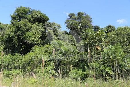 Foto: Petroamazonas
