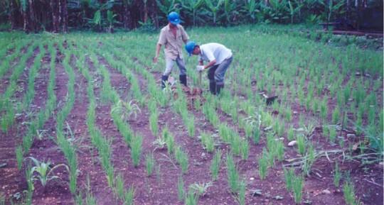 En 1998, Texaco fue liberada en Ecuador luego de una remediación ambiental efectiva / Foto: El Oriente