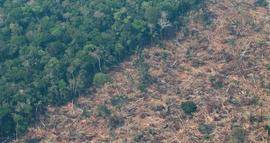 La Amazonía perdió un área equivalente a Chile en 36 años / Foto: EFE