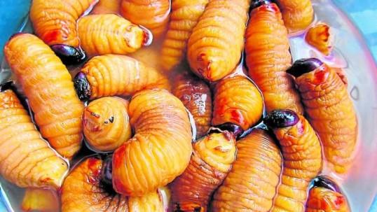 Muchos los comen vivos, mientras otros los prefieren cocinados. El chontacuro es una receta ancestral de las comunidades amazónicas del Ecuador. Foto: EXTRA