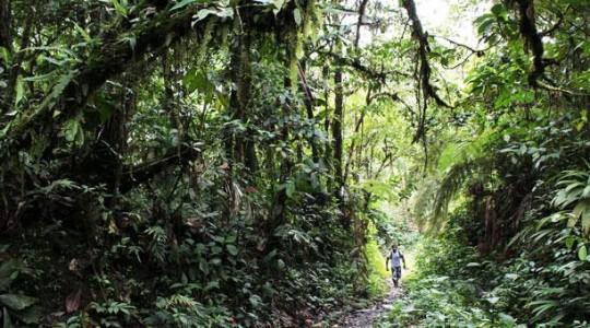El guía Byron Noteno es una de las personas que constantemente se sumerge en la selva. Foto: El Comercio