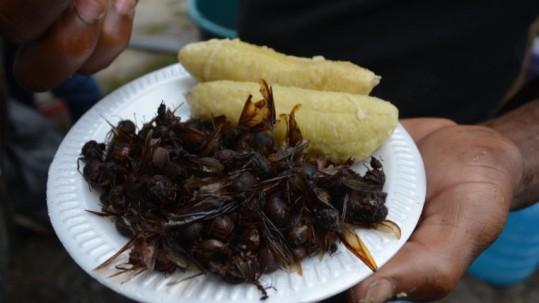 La hormiga siquisapa, un manjar de la región amazónica. Foto: Expreso