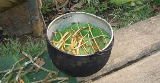 Un té amazónico usado por chamanes fomenta la formación de nuevas neuronas / Foto: EFE