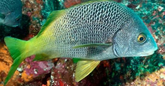 Dos nuevas especies de peces son descubiertas en Galápagos y Pacífico Este Tropical/ Foto: EFE