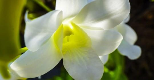 12 jardines botánicos de Orquídeas fueron regularizados en Napo/ Foto: cortesía Ministerio de Ambiente