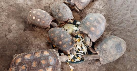 Ecuador devuelve a 35 boas y nueve tortugas a su hábitat en el Yasuní / Cortesía del Ministerio de Ambiente