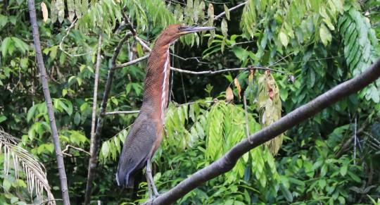 La deforestación afecta a diversas especies en Sucumbíos. / Foto: El Oriente