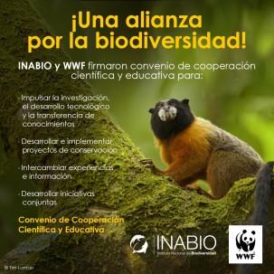 Cortesía de El Instituto Nacional de Biodiversidad (INABIO)