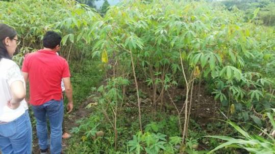 ENSEÑANZA. El cacao fino de aroma es la especialidad en este sector amazónico. (Foto: Santa Rita, la ruta del cacao). Foto: La Hora
