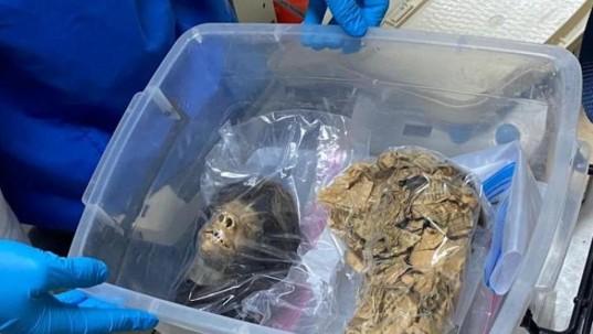 Policía recupera una tzantza que estaba en Estados Unidos / foto cortesía Policía Nacional