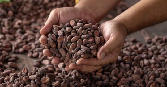 2020, el año del cacao ecuatoriano / Foto: Shutterstock