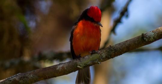 Buscan descendientes de ave que llegó a Galápagos hace casi un millón de años / Foto: EFE